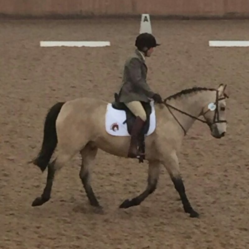 Mercian Dressage to Music May 2016 Sue Frank & Mystery