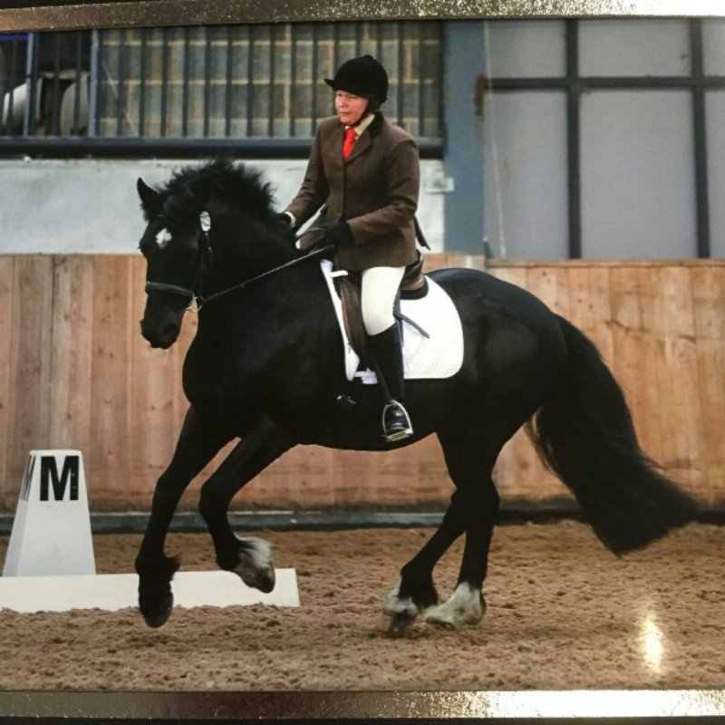 Mercian Dressage to Music May 2016 Hope Nightingale & Mervin