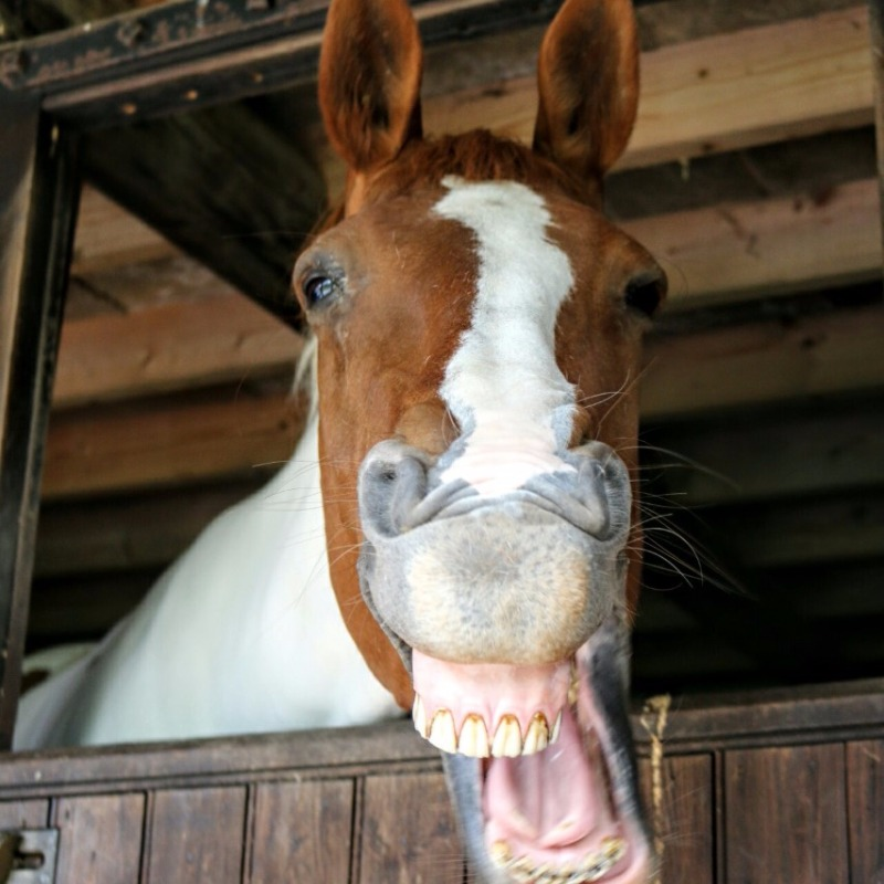 The winner of our Happy Horse photo competition - Ruby owned by Meg Barstow
