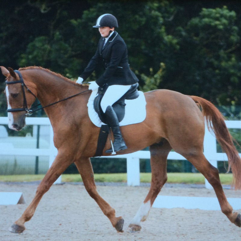 Steph Pinfield & Chester at SW Regional Championships, Hartpury, August 2016